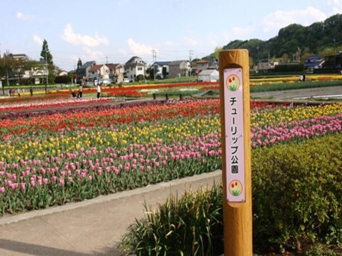 【周辺】 チューリップ公園 徒歩9分 春になると美しいチューリップがあたり一面に咲きます